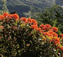 Flowers in Autumn at Larnach Castle, Larnach Castle